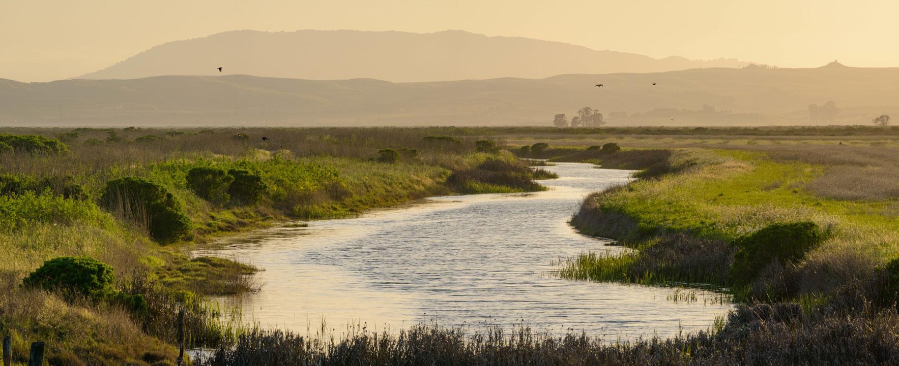 Sonoma Land Trust Baylands