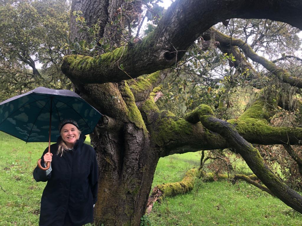 Anet in rain